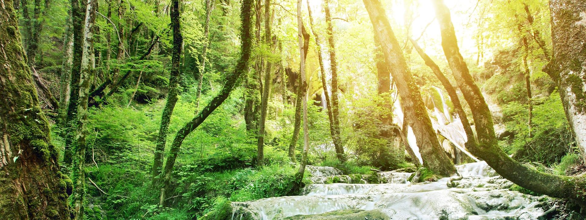 Contact Us | Serenity Gardens