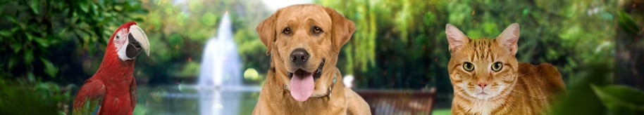 About Us | Lifetime Companion Pet Services