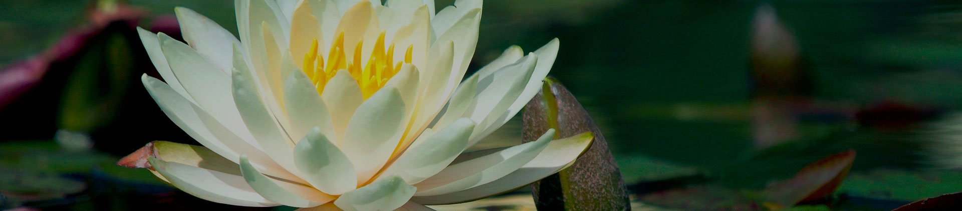 Resources | Grace Funeral & Cremation Services
