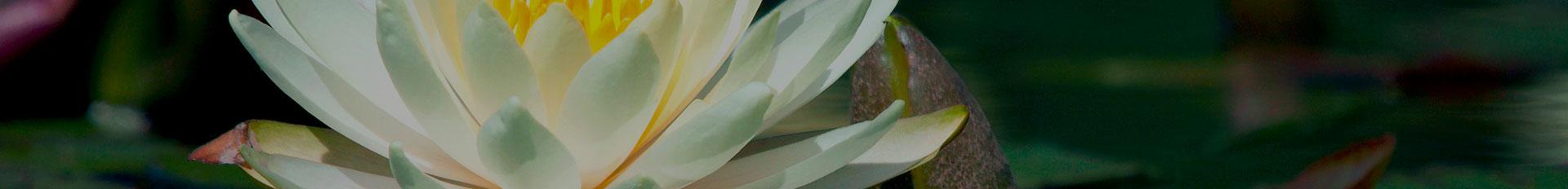 Resources | Gorgen Funeral Services