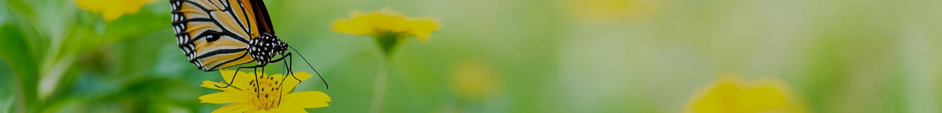 Samart-Mothe Funerals | Samart-Mothe Funeral Home