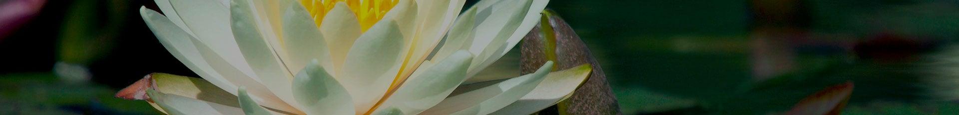 Resources | Samart-Mothe Funeral Home