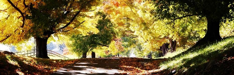Grief & Healing | Roy Davis Funeral Home