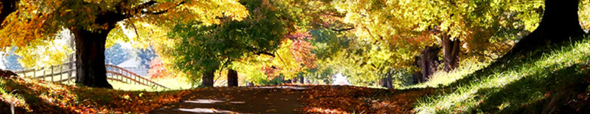 Resources | Jones Funeral Homes Dixon and Amboy, Illinois
