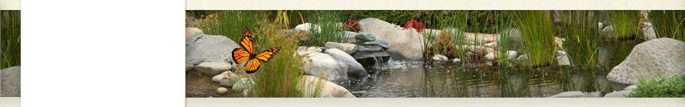 Grief & Healing | Santa Cruz Memorial