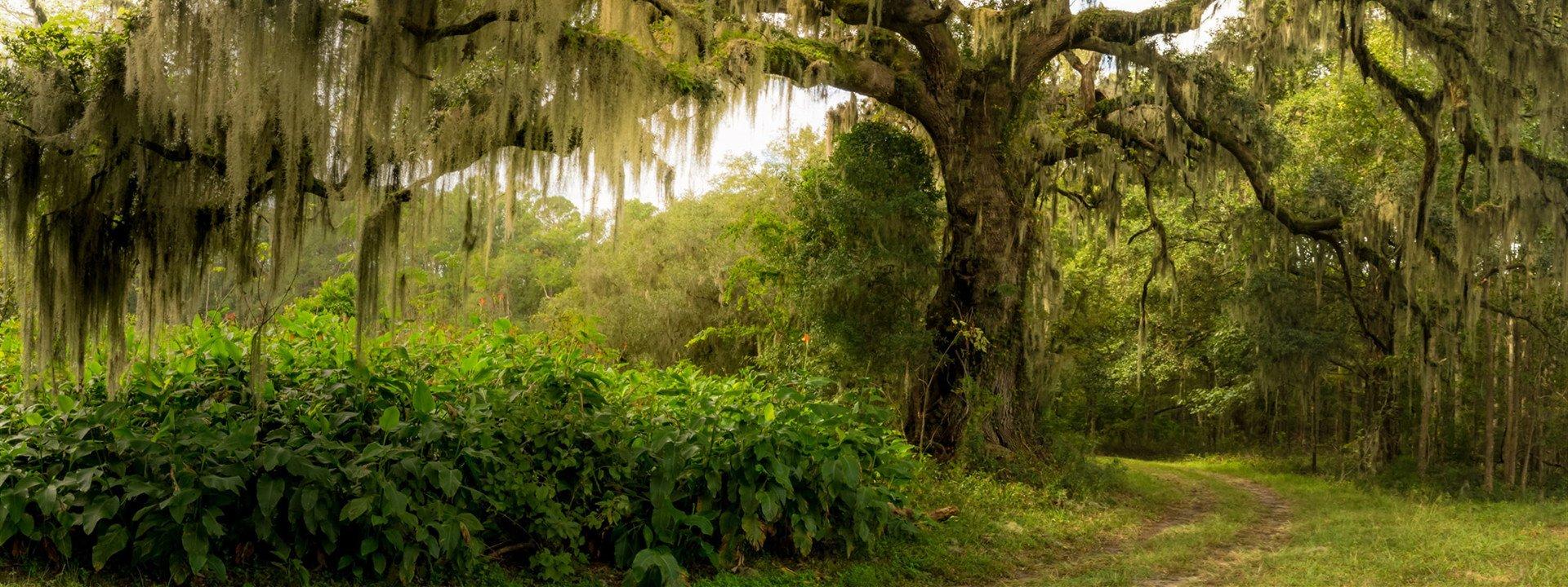 Hillcrest East | Savannah Family Cemeteries