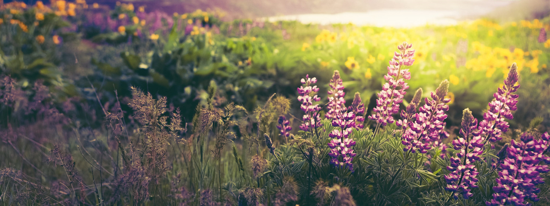 Grief & Healing | Farnstrom Mortuary