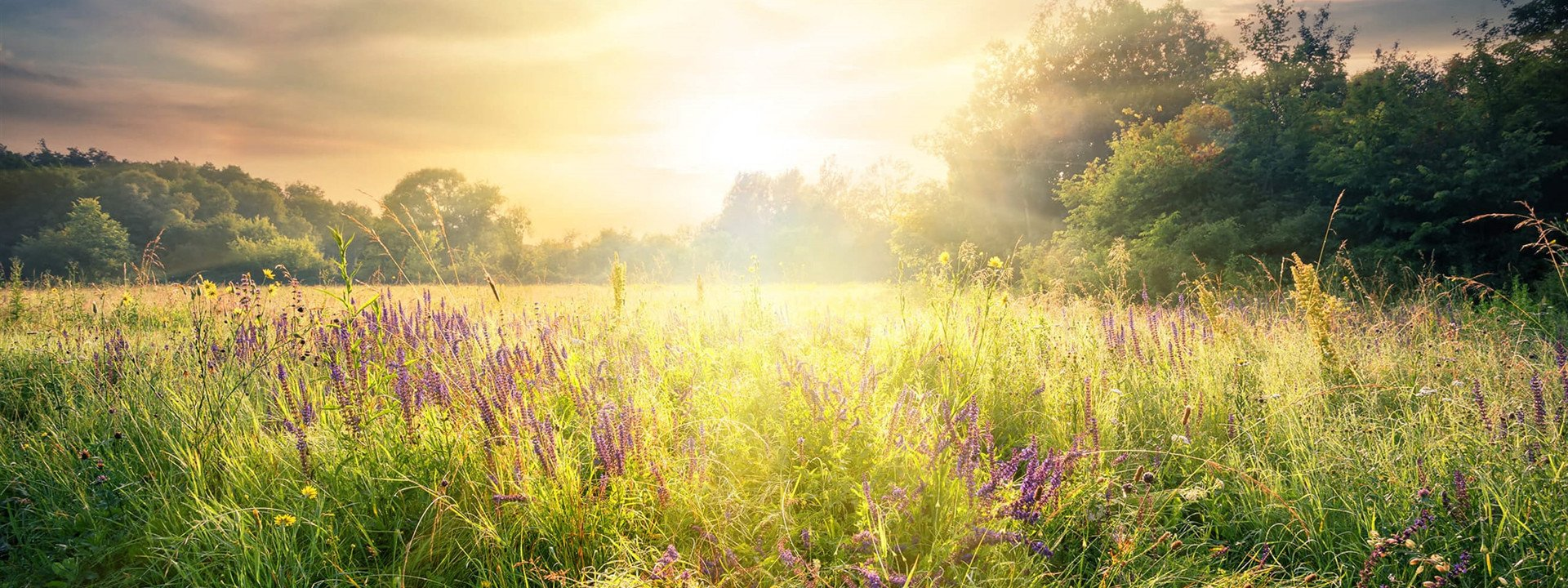 Grief & Healing | Sheetz Funeral Home, Inc