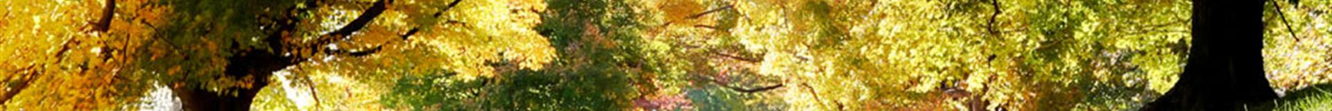 Grief & Healing | Grandview Cemetery