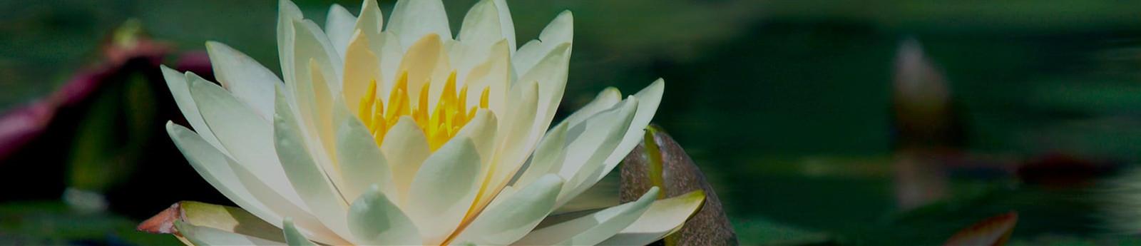 Grief & Healing | Bosak Funeral Home