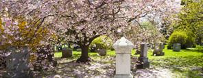 Funeral Homes Glen Eden CA