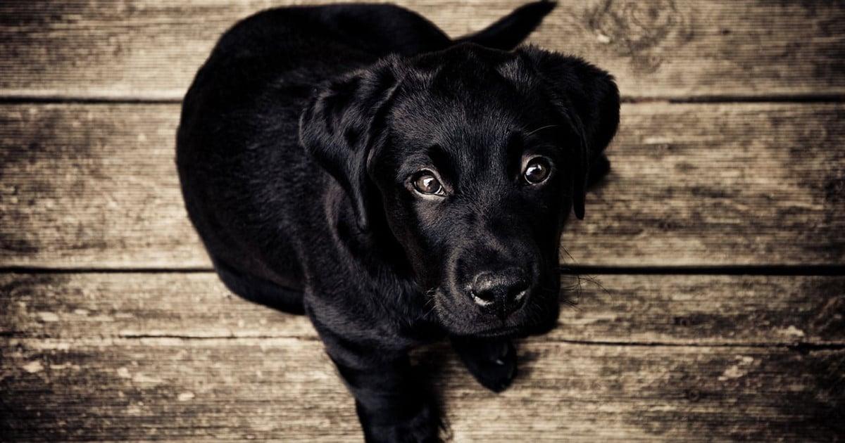 Pet Services | Crain Funeral Home - Cape Girardeau, MO
