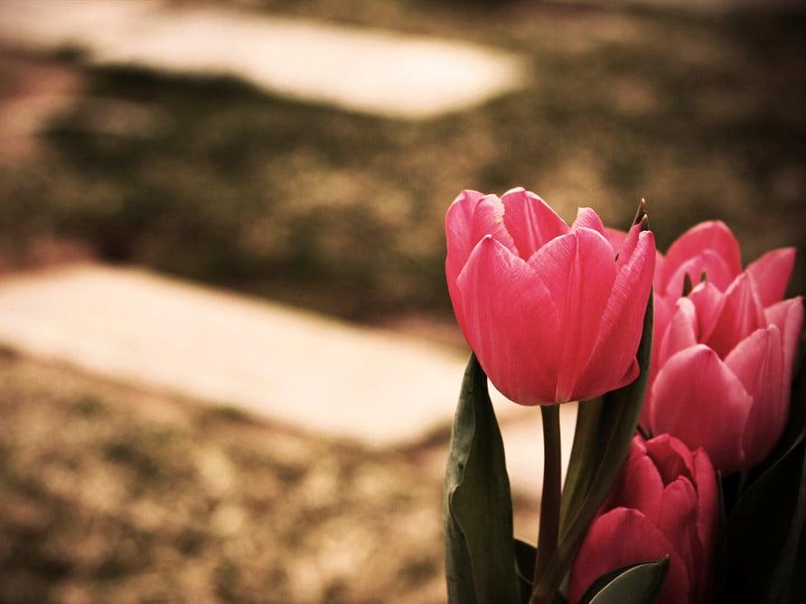 Cemetery Flower Option