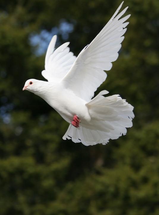 Dove Release
