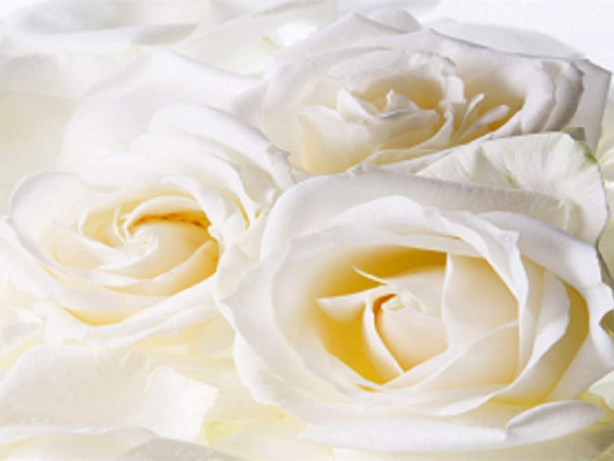 Funeral Homes and Cremation Services in Tallahassee, FL