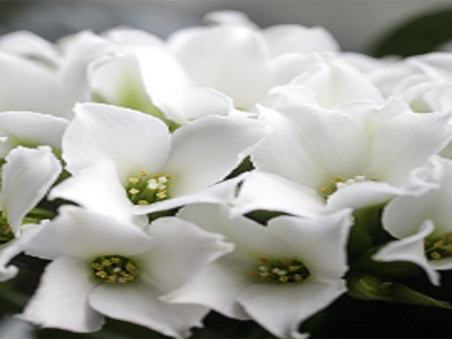 Funeral Homes and Cremation Services in Bristol, FL