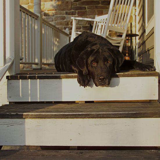 Faithful Companions Pet Crematory