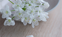 Funeral Homes and Cremation Services in Moberly, MO