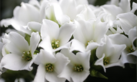Funeral Homes and Cremation Services in Centralia, MO