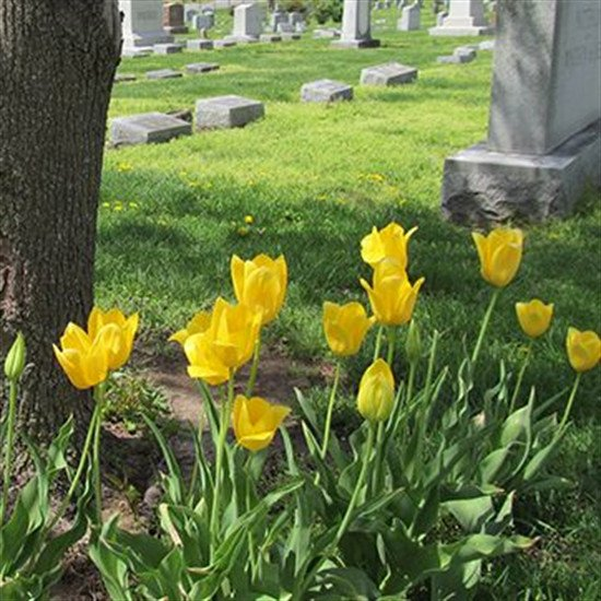Cemetery Spaces for Sale