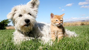 Dog and Cat sitting in a field