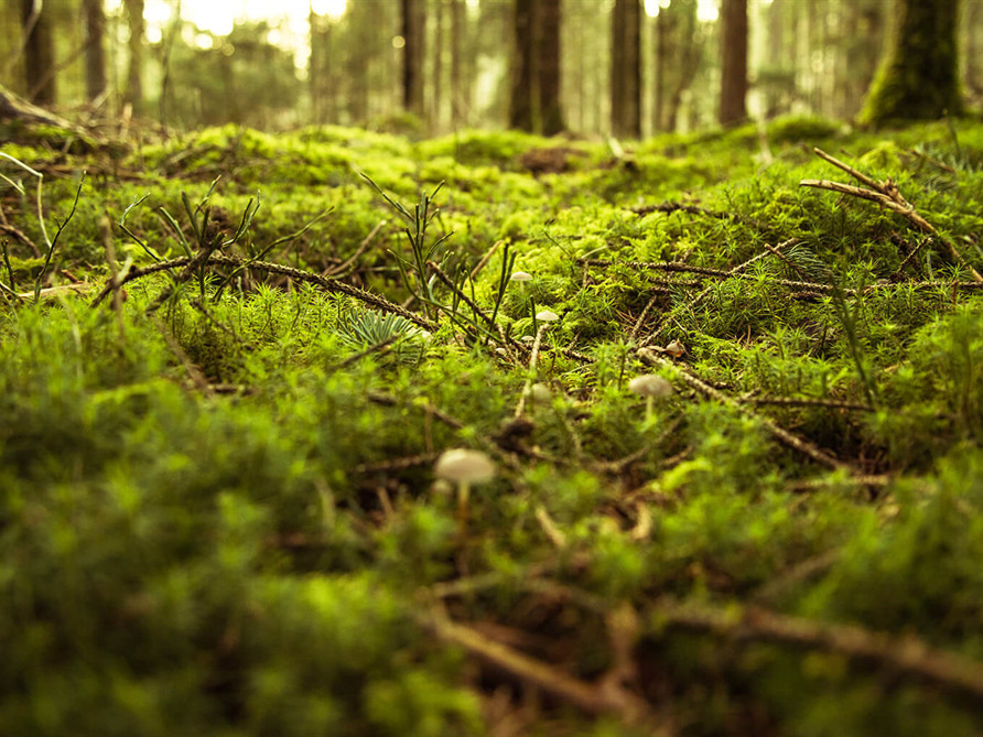 Green Burials
