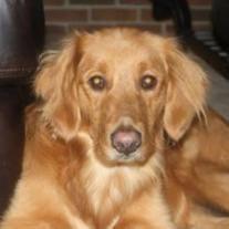 Carmen Sample loyal companion of The Woodyard Family