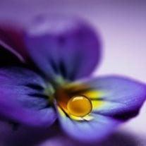Violet Annabelle Weedman