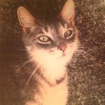 """Homie  D. Cat """"Hornung"""""""