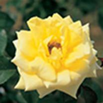 Donna Rose Maroney