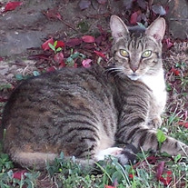 Tiger Middleton