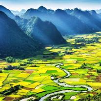 Thanh Thai