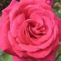 Vivian Darlene Flowers