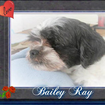Bailey Ray Quillin