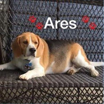 Ares Marin