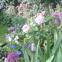 Marlane Gartenlaub