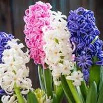 Hyacinth  Walker
