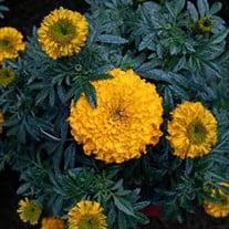 Rosaura Flores