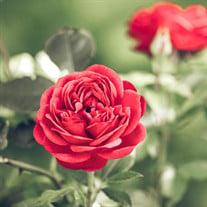 Estela Flores