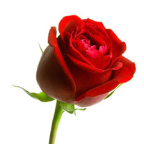 Jean Ann Russell