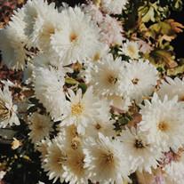 Maclovia Flores