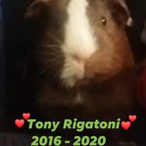 Toni-Rigatoni Darling