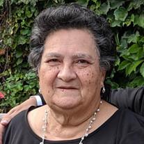 Isabel Rosa Arlequin
