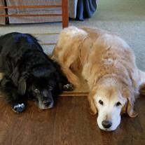 Milo & Molly Gearinger