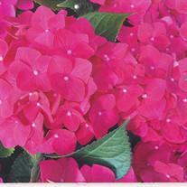 Perfecto Alcanites Flores