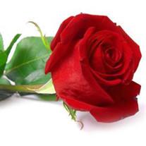 Rosa E Leal