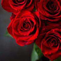 Sallye Rose