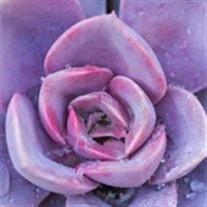 Rose Markert