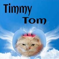 TimmyTom Stein-Brook