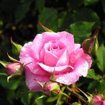 Cecelia Rose Pagano